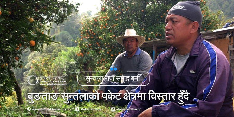 gara bahadur bungtang orange farm nuwakot agriculture trisuli