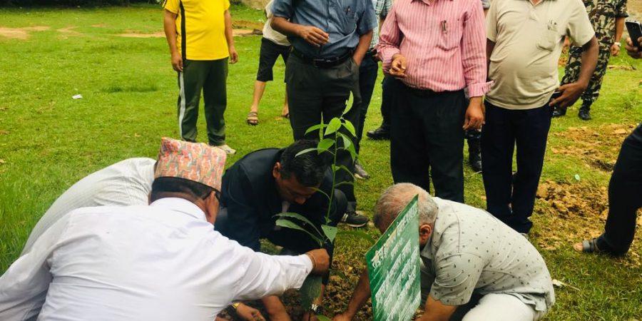 tree plantation santaman tamang chief guest
